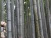 Arashiyama foret 2
