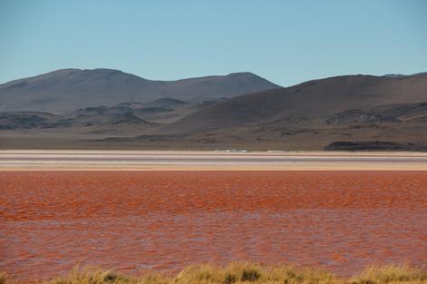 Laguna Colorada