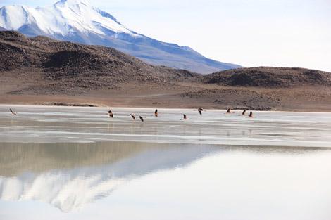 lac et reflet montagne et flamands
