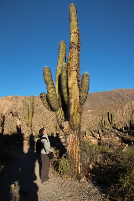 Tilcara Cactus Fabien