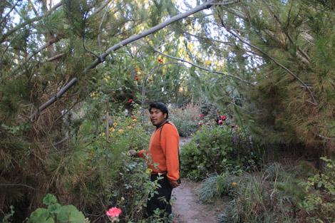 Dans le jardin…