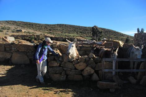 Mules de l'Isla del Sol