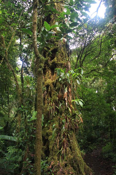 Des plantes qui poussent sur des plantes qui poussent sur des arbres
