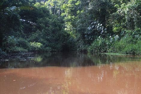 Canaux de Tortuguero