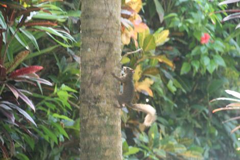 Dans le jardin tropical : des écureuils.