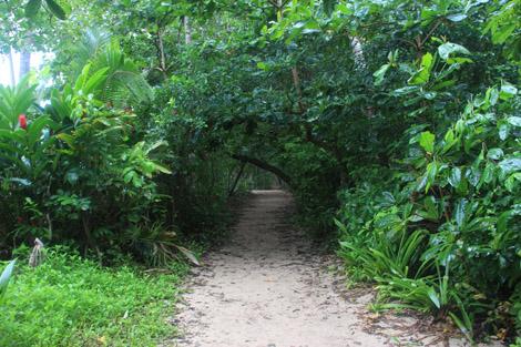 Le parc national de Cahuita