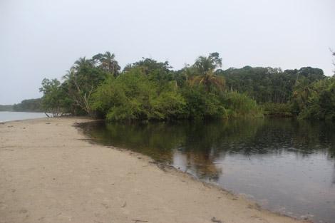 La mangrove devant la mer