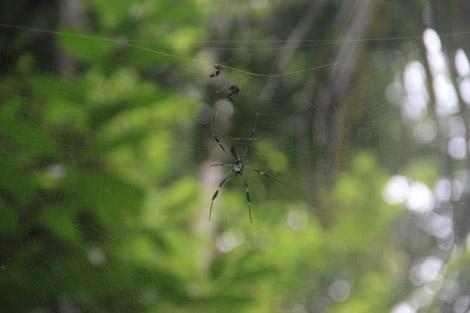 Ses araignées têtes de mort…