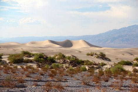 … Dunes de près!