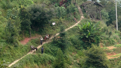 Rizières des terrasses du Dragon