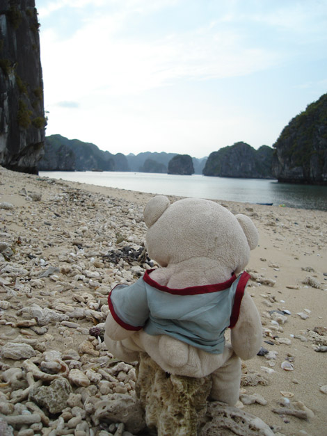 Nestor nous attend lui aussi patiemment, en regardant la mer