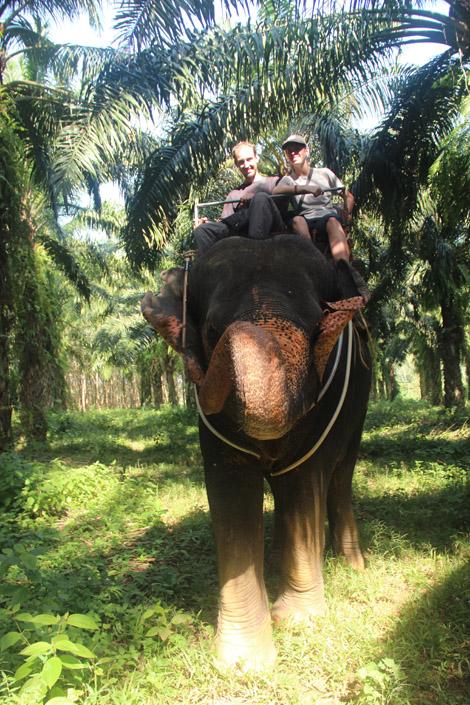 """Nous sur Naomi, """"notre"""" éléphant!"""