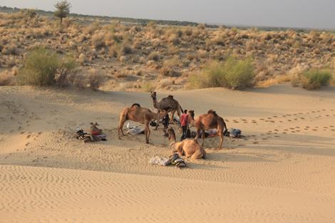 Anoj, Ojas et les animaux sur le suite du campement pour la nuit