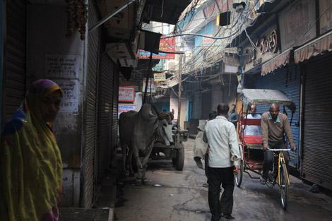 Les vaches indiennes sont libres comme l'air.