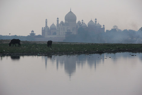Voici la photo que je prenais sur la photo précédente… Taj et Vaches (2)